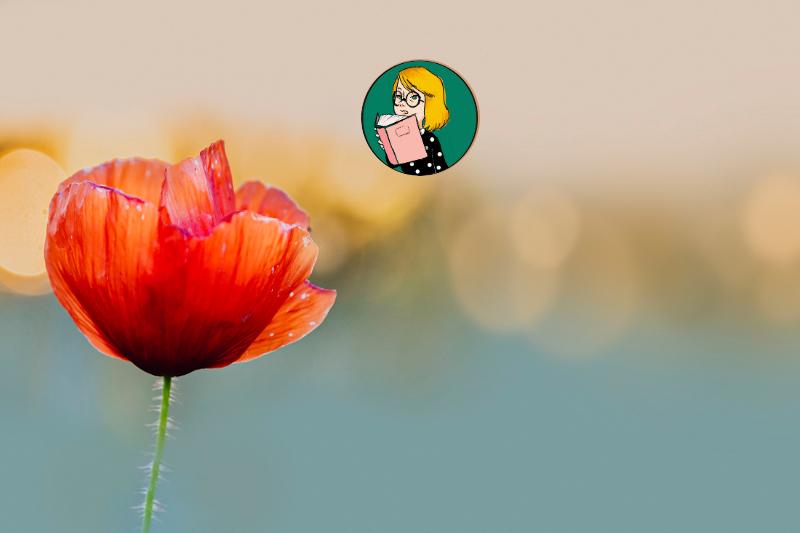 Fleur pavot à la fin de l'été